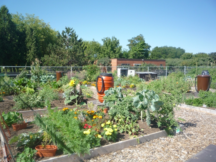 One of the city's community gardens