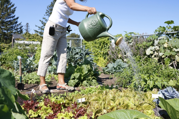 Maintaining a garden plot in one of the city's community gardens