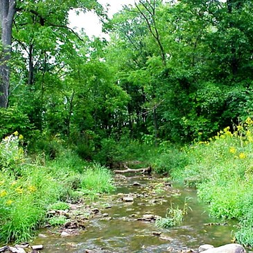 A healthy creek