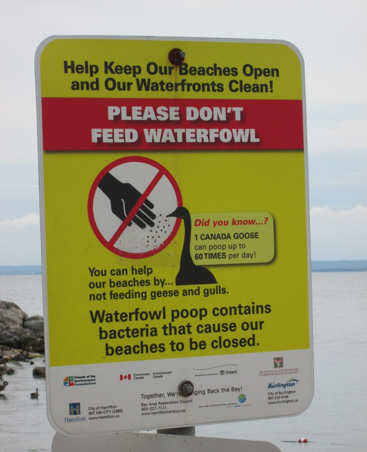 A sign advising not to feed the waterfowl.