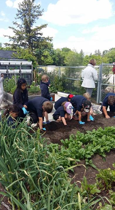 A local school group helping at the Grow to Give garden at Burlington's Central community garden.