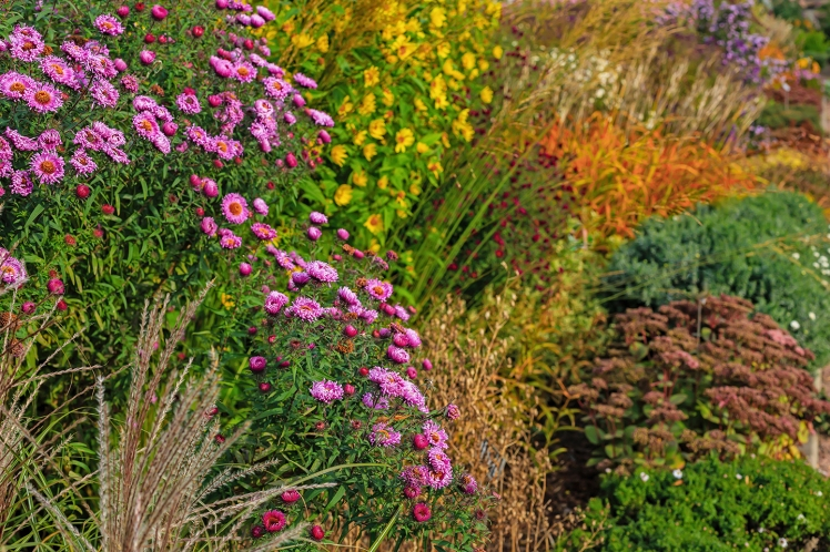 Fall garden image