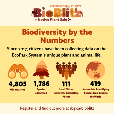 BioBlitz 2019 - biodiversity by the numbers graphic