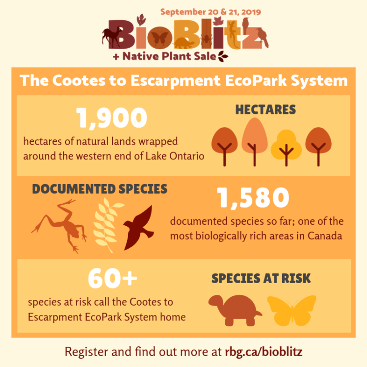 Graphic illustration on Cootes to Escarpment EcoPark System stats